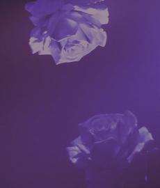 4 etapy związku, czyli jak ewoluuje miłość